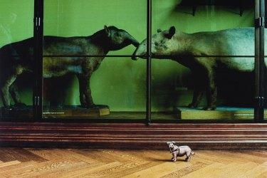 P. Dressler, Aus Mit großem Interesse, Naturhistorisches Museum 1989 © Fotohof Archiv