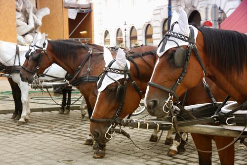 Pferde vor der Hofburg c) Vladimir Mucibabic /shutterstock