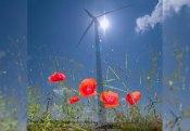 Wort.Wind.Bild © Heinz Cibulka