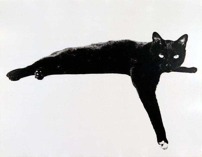 Roland Pleterski Mauki, Irving Penns Katze New York 1958 © Roland Pleterski, courtesy OstLicht Gallery
