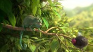 """© """"Our Wonderful Nature - The Common Chameleon"""" - Tomer Eshed"""