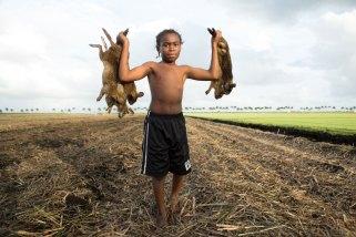 """© """"The Rabbit Hunt"""" - Patrick Bresnan"""