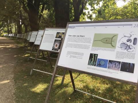 """Ausstellungsrundgang """"Schritte durch die Zeit – vom Sternenstaub zu uns"""" im Botanischen Garten Wien"""