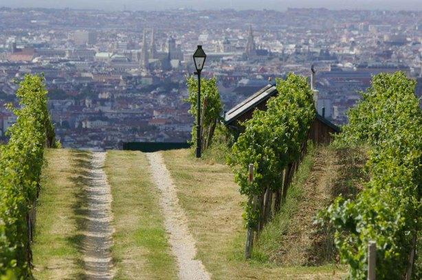 Traumblick auf Wien vom Grinzinger Nußberg aus, wo das bekannte Weingut Mayer seine Weinstöcke hegt und pflegt © Weingut-Mayer_am_Pfarrplatz_Blick_