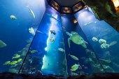 Aquarium im Haus des Meeres © Daniel Zupanc