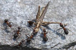 im Ameisenstaat
