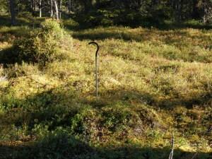 En härd. © Norrbottens museum, notera att solen lyste en dag!