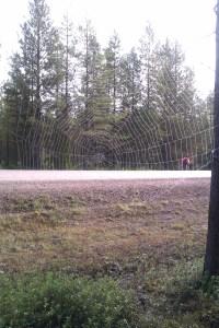 Ett jättestort spindelnät invid väg 880 © Norrbottens museum