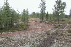 Markskadan i vilken boplatsen först påträffades och där vi senare hittade en härdgrop. ©Norrbottens museum. Foto Olof Östlund