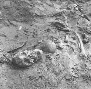 Kranier och andra skelettdelar i massgraven på Magasinsgatan.