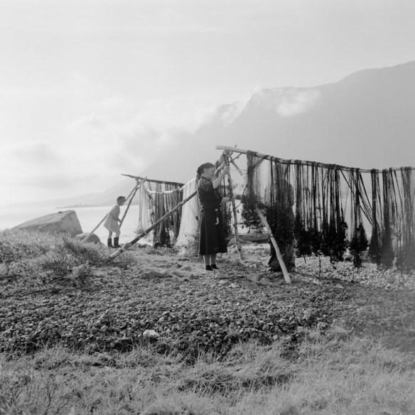 """Vierme-tsakkeh, """"nätklykorna"""", är en ställning för nät som förekom vid visten och fiskekåtor utmed stränderna. Här vid det samiska sommarvistet Aleskätje vid sjön Satisjaure. Foto: Björn Allard 1958. Utgången upphovsrätt. Finns med i Riksantikvarieämbetets bilddatabas Kulturmiljöbild."""