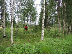 En husgrund i Matojärvi.