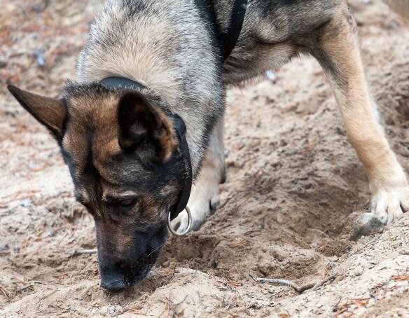 arkeologihund_20161011_kje7762