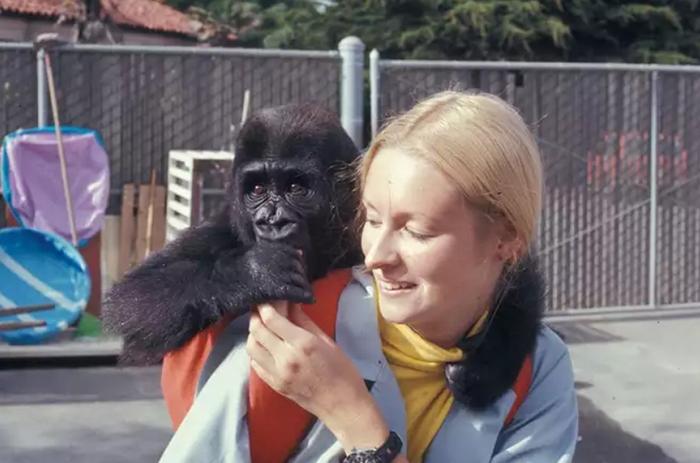 Фрэнсис Паттерсон и молодая Коко.