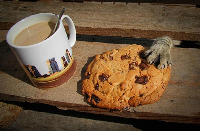 Таинственное исчезновение вкусной печеньки.