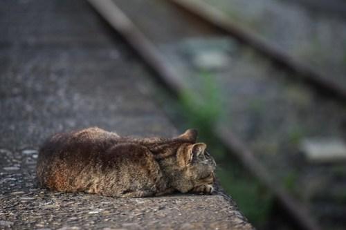 鶴見線の猫
