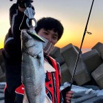 Japanese sea bass fishing at Headland.