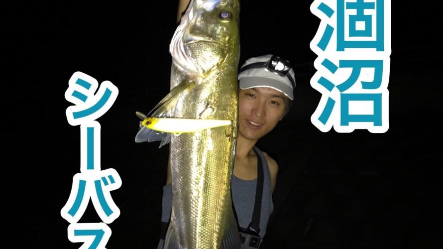 【2018年】涸沼シーバスを遂に攻略!70cmオーバーの良型が釣れた方法