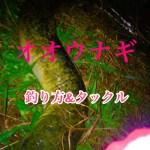 【沖縄】オオウナギを釣るために必要な知識&タックルを紹介!