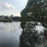 【写真付き】城沼でバス釣りに挑戦&ポイント紹介!城沼と古城沼があったがこれはどっち?