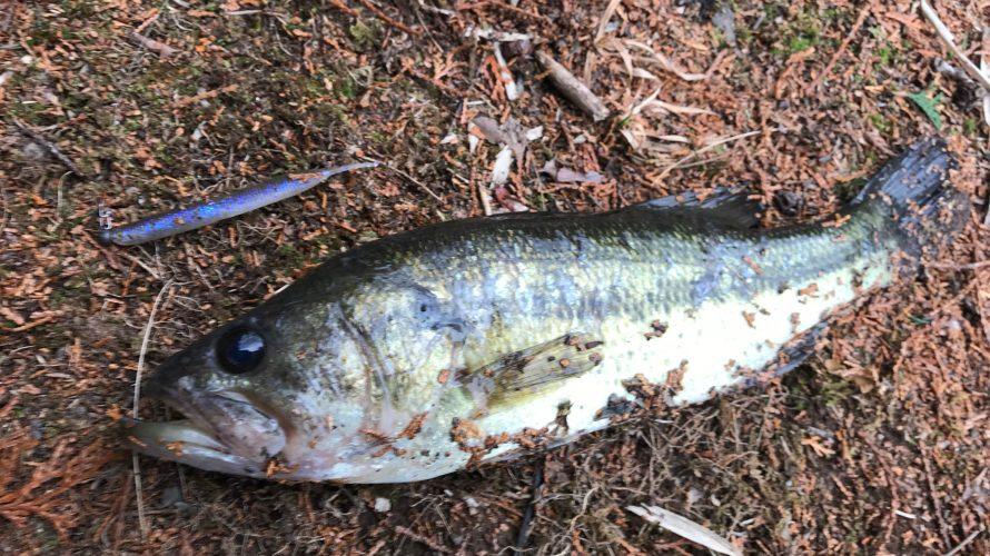 ミドストで釣れるワームを徹底検証!釣れるワームはボディの後方に着目?
