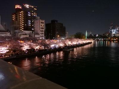 造幣局 桜の通り抜け  夜桜 屋