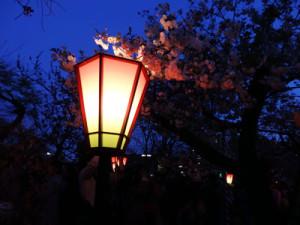 造幣局 桜の通り抜け 夜桜 屋台