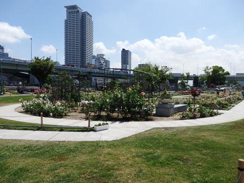 中之島公園 バラ園 画像