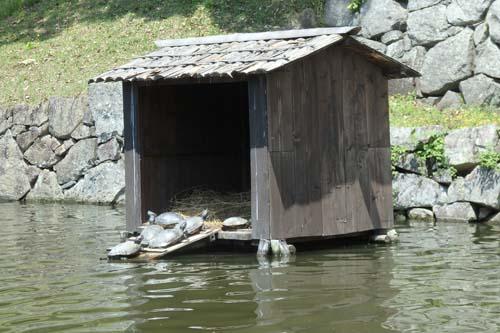彦根城 屋形船 予約 所要時間 乗り場