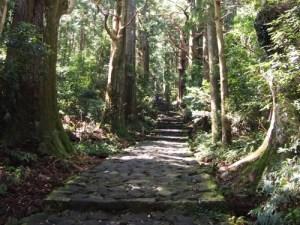 熊野古道 kumanokodo