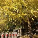 【関西】混雑なしの穴場の紅葉スポット!紅葉ドライブが楽しめる「熊野古道」に近い子授け銀杏や滝のスポットがオススメ!