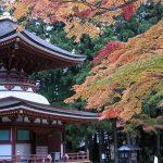 【高野山と熊野古道へのアクセス】バスで約4時間!熊野三山と高野山3泊4日モデルコース紹介!