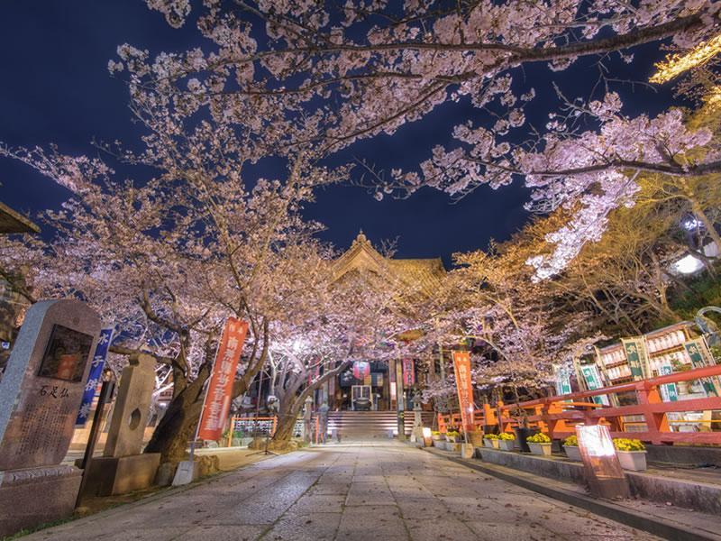 関西の桜2018!穴場スポットと名所!見頃とライトアップ情報!