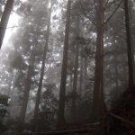 【大雲取越】熊野古道コース中級者におすすめ!2泊3日!自然満喫で魂の旅!