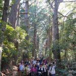 熊野古道ウォーキングツアー!熊野那智大社・那智の滝!神倉神社!大門坂!名所をめぐる!