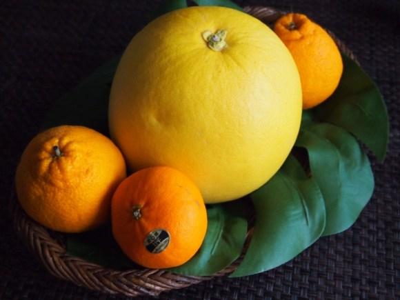 晩白柚熊本八代名産