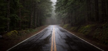 nature-forest-road-rain-fog-humidity-pine-morning