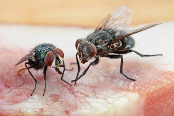 Чем отпугнуть мух