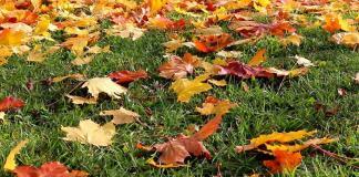 падают листья