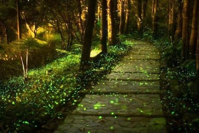 Китайский парк светлячков оживает ночью