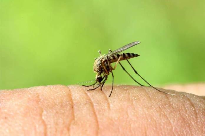 Ученые узнали, какую кровь больше всего «любят» комары