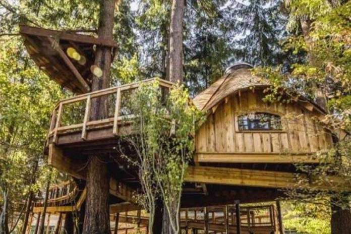 Корпорация Microsoft построила офис на дереве