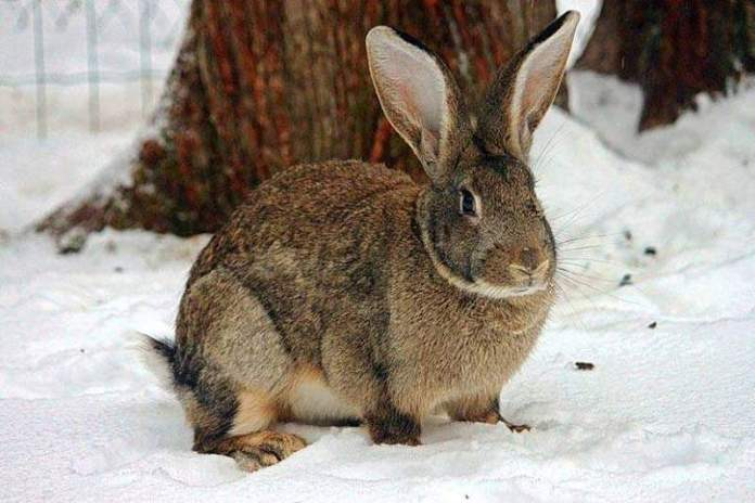 Кролику зимой нужны витамины