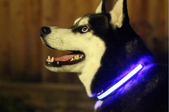 Собачий ошейник для ночных прогулок