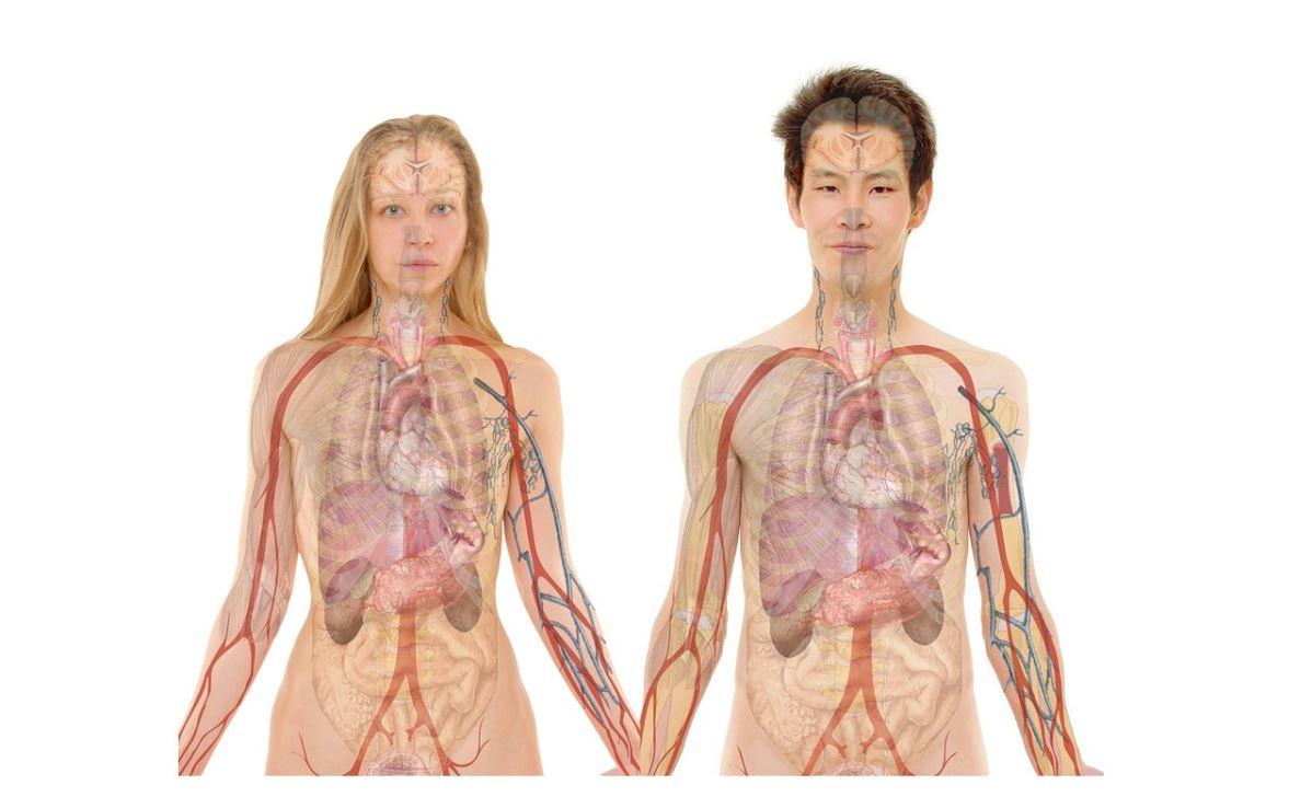Geef jouw nier-energie wat extra aandacht