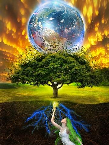 De genezende kracht van bomen