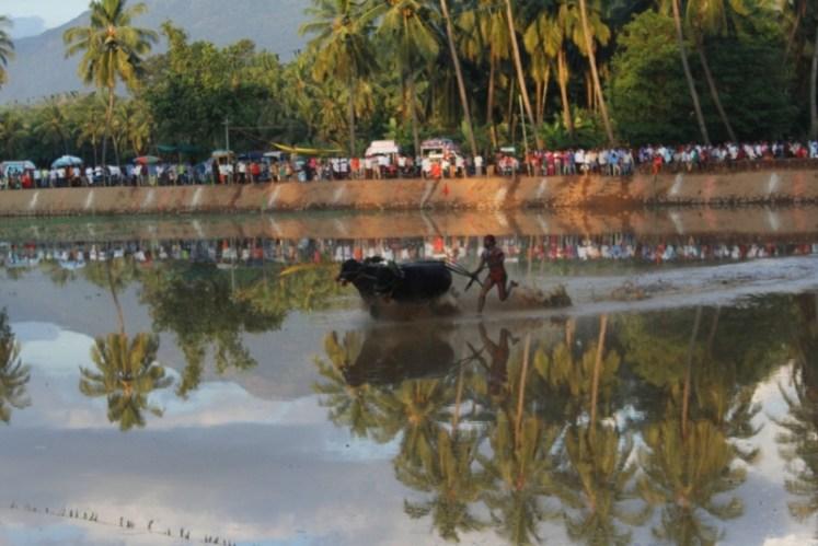 Byndoor Thaggarse Kambala  (11)