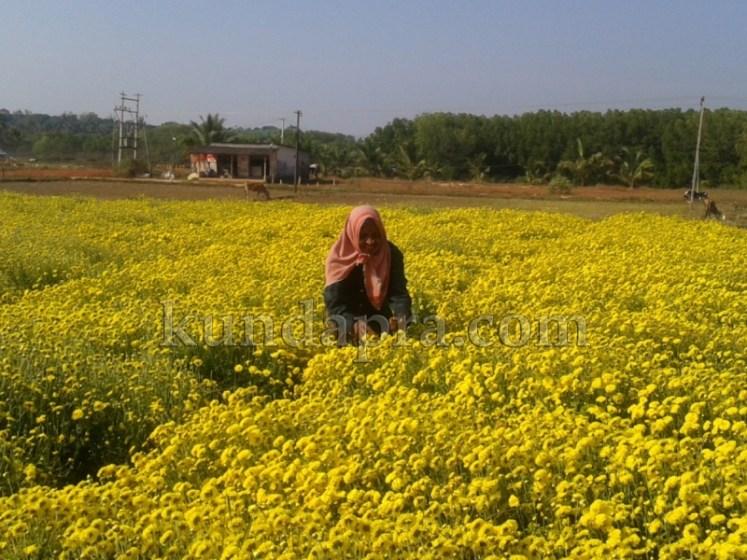 Hemmady Sevanthi Flower - A Famous Flower crop in Kundapura taluk Hemmady.  (9)