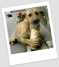 psia bezdomność