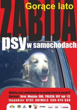 psy-w-samochodach